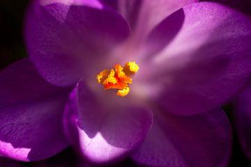 Paars bloem in detail van Ronald De Neve