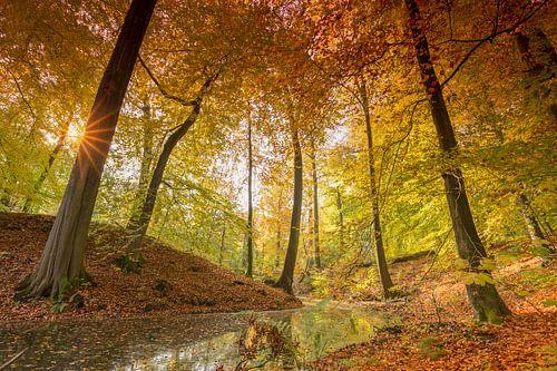 Zonsopkomst in de bossen op de Zijpenberg van