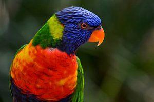 Rainbow Lorikeet von Leo Huijzer