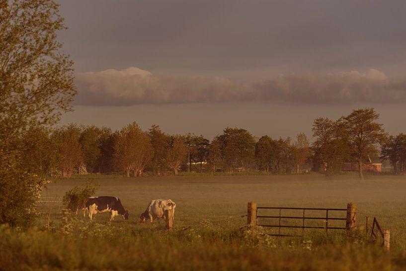 Early morning mist #1 van Anita Meis