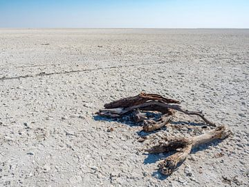Makgadikgadi zoutvlaktes in Botswana met zwerfhout van victor van bochove