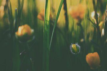 Yellow van Paul Roelofs Fotografie