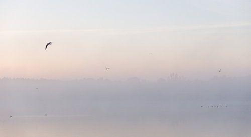 Ochtend Mist Over Meer