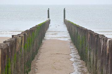 paalhoofden strand Dishoek van Petra De Jonge