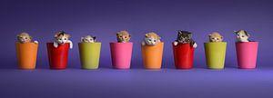 Kittens Katten Poezen van Stichting Kittenopvang Kitten&Co