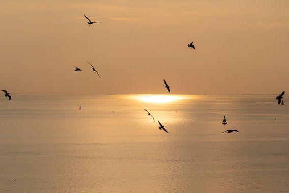 Ondergaande zon met meeuwen op de voorgrond