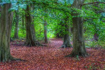 Herfst op de grond, zomer in de takken. von Mariska Brouwenstijn