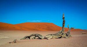 Dood hout in de Dode Vallei in de Namib woestijn