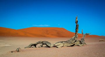 Dood hout in de Dode Vallei in de Namib woestijn van Rietje Bulthuis