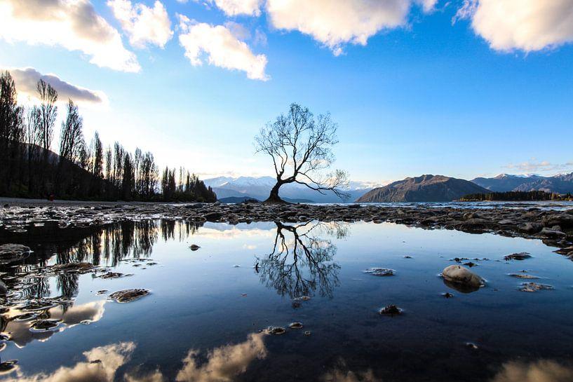 Eenzame boom van Marko de Jong