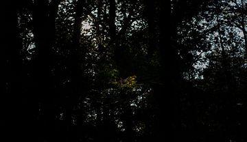 Zonlicht van Onno van Kuik