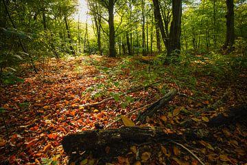 bos sur Dirk van Egmond