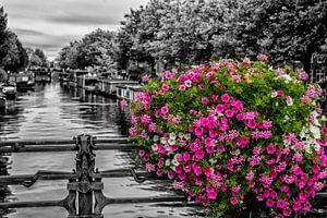 Bloemenpracht op een Amsterdamse gracht. van Don Fonzarelli