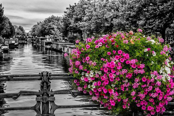 Bloemenpracht op een Amsterdamse gracht.