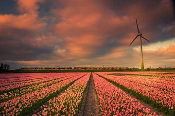 Roze zonsondergang van Peter Heins