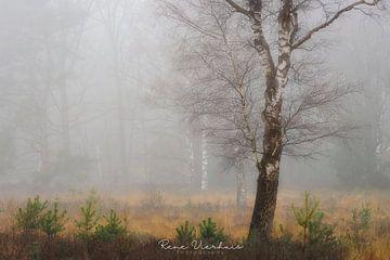 Calm misty Scene von René Vierhuis