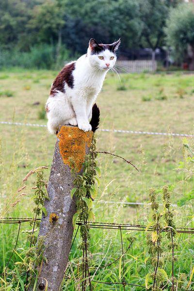 Kat op een paal van Dennis van de Water