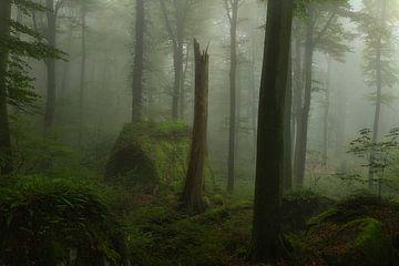Sfeervolle mistige ochtend in de bossen in het Mullerthal in Luxemburg.