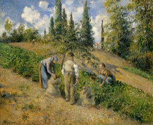 De oogst, Pontoise (La Récolte, Pontoise), Camille Pissarro