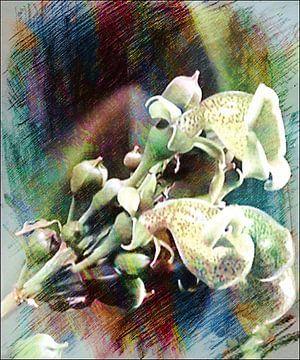 Orchideenknospe-Zeichnung van Margitta Frischat