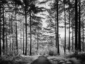Waldweg von Lex Schulte