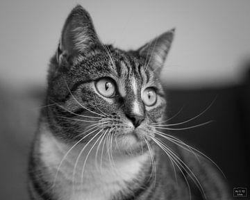 Katze (Mini) von Photo Julleke