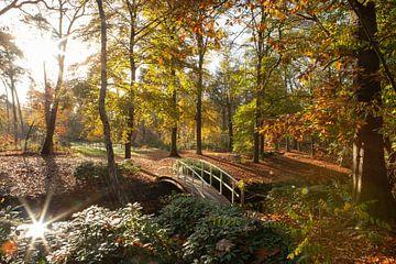 Sonnenstrahlen im Herbstwald Zeist von Peter Haastrecht, van