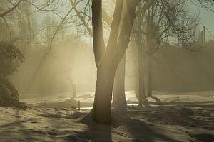 Un arbre au soleil, du brouillard et de la neige sur Norman van Schijndel