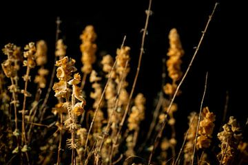 Arid auf Schwarz von Urban Photo Lab