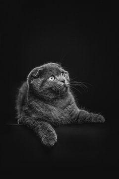 Dunkles Porträt einer Katze von Lotte van Alderen