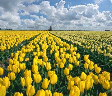 Mühle am Prinsenhof mit einem Feld gelber Tulpen, Niederlande, Trick, Montage von Rene van der Meer