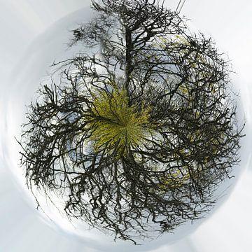 Bomen in het rond von Cora Unk