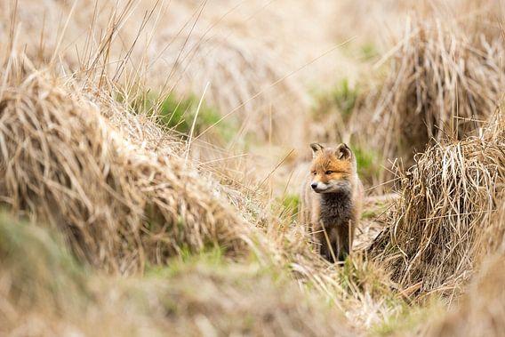 Fuchs von Bob Luijks