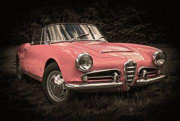 Araignée Alfa Romeo Giulia (variation de couleur) sur Ronnie Reul