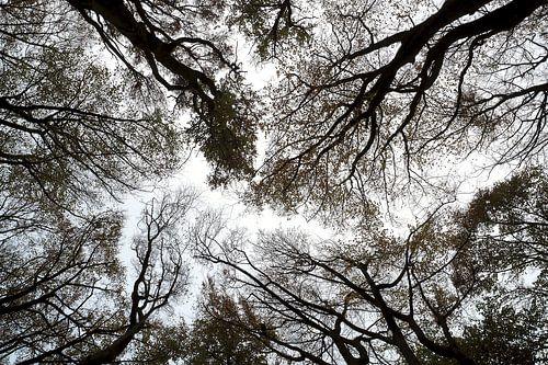 Laatste blad aan de boom van