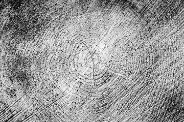 jaarringen, boom dwarsdoorsnede, zwart-wit variant von Wim Demortier