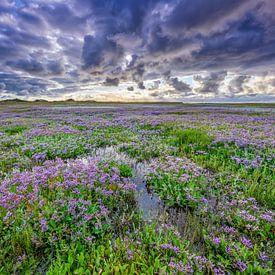 Lamsoor op Texel. van Justin Sinner Pictures ( Fotograaf op Texel)