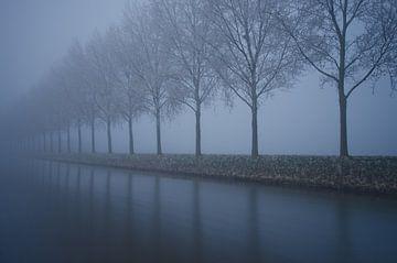 Spookachtige rij met bomen von Remco Swiers