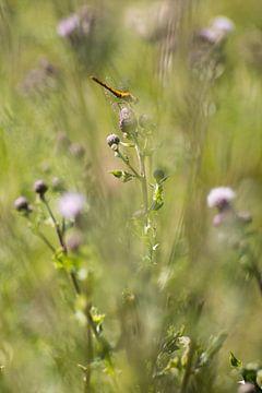 Libelle van Wolbert Erich