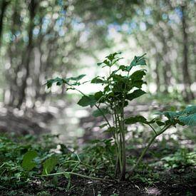 Het bos van Miranda van Hulst