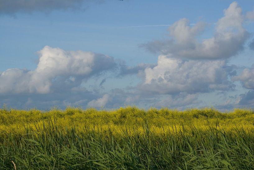 Blauw, geel, groen (1). van Bas Smit