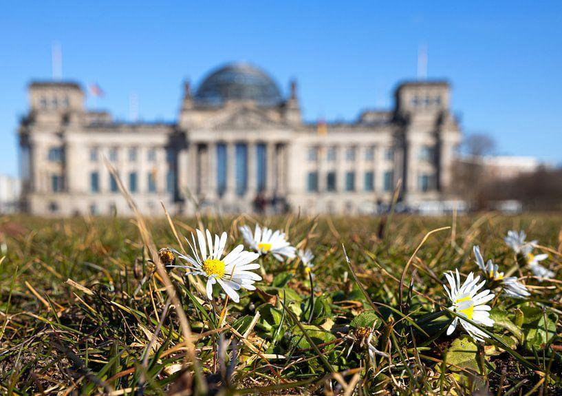 Pâquerettes devant le bâtiment du Reichstag à Berlin sur Frank Herrmann