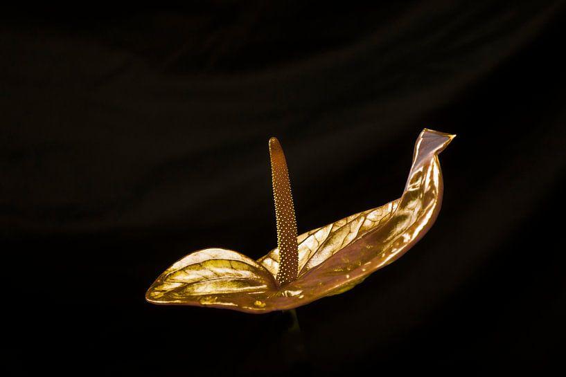 Gouden Anthurium van arjan doornbos