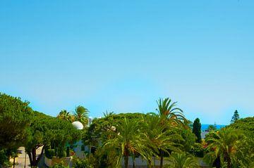 Sonne, Meer und Palmen von Bente Teertstra