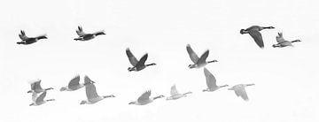 Ganzenvlucht van Jacqueline Koster