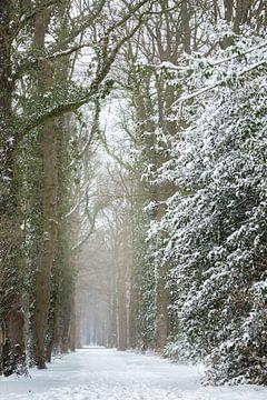 Winterlandschaft, Wald mit Schnee bedeckt | Fine Art Photo Print von Karijn Seldam