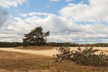 Zandverstuiving de Haere op de Veluwe van Meindert Marinus