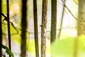 trees in spring van anouk smit