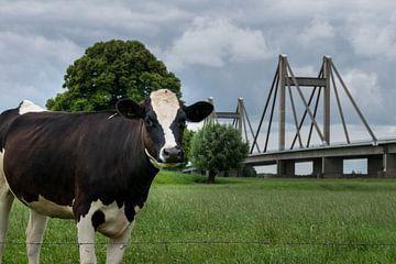 Koe en Brug