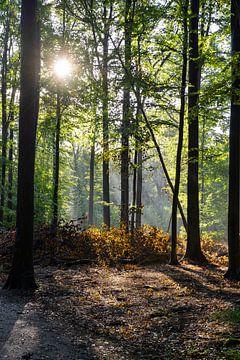 Heldere ochtend in het Bos van Noraly Sprenkels